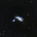 NGC 4490 Cocoon Galaxy,                                JohnAdastra