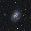 Galaxy NGC 4395,                                Simas Šatkauskas