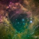 Caldwell 49 - Rosette Nebula,                                Bruce Rohrlach