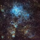 Tarantula Nebula (NGC2070) of LMC in Hubble Palette,                                BO PENG(ISAAC)