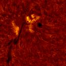 2020.06.07 Sun AR12765 H-Alpha,                                Vladimir