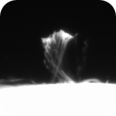 Loop Prominence Evolution,                                Marcello B