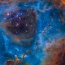 Bok globules in NGC 2244,                                Christoph Lichtblau