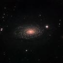 M63 in L(L)RGB,                                Tom Gray