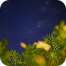 Orion belt and hibiscus ,                                LeoCaldas6