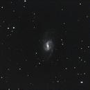 NGC 3359,                                Lothar Dorsch