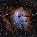 Tadpoles Nebula,                                Jan Monsuur