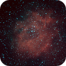Rosette Nebula,                                David C. Brown