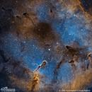 IC 1396/1396A - The Elephant's Trunk Nebula,                                Patrick Cosgrove