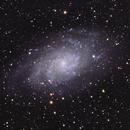 M33 (Triangulum Galaxy),                                Joel Shepherd