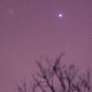 Messier 41 and Sirius  (full frame wih tree),                                ricardo leite