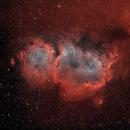 IC 1848 bicolor,                                FrancescoTallarico