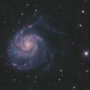 M101 HaLRGB,                                HomerPepsi
