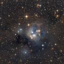 NGC 7129 Cosmic Rosebud,                                Tim Gillespie