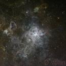 NGC 2070 - Chile Scope - Tarantula,                                Dennis Vollink