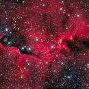 IC 1396 Elephant Trunk,                                Dean Salman