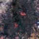 NGC6334 Cat's Paw Nebula,                                Frédéric DAUDIN