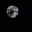 100 % Flower Moon,                                Van H. McComas