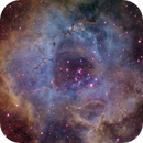 Rosette Nebula Hubble palette,                                Matteo Quadri