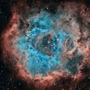 Rosette Nebula,                                Phillip