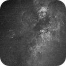 Cygnus widefield in H-alpha,                                petelaa