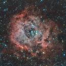 Rosette Nebula (NGC 2237, 2238, 2239, and 2246),                                Ed Lubat