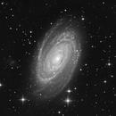 M81 Luminance,                                Mike Matthews