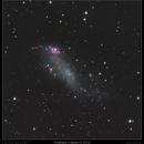 Coddington's Nebula (IC 2574) Irregular Dwarf Galaxy in Ursa Major (95 hrs integration),                                Mike Oates