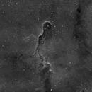 IC 1396 - Elephants trunk nebula in Ha,                                Rob Parsons