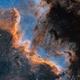 The Cygnus Wall,                                Bowen Cameron