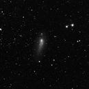 Panstarrs Comet,                                Rhett Herring