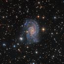 NGC 2835,                                SCObservatory