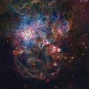 Arachnophobia - NGC 2070 in Narrowband,                                Andy 01