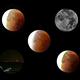 Composition Eclipse lunaire,                                Eddy Wicart