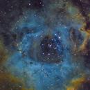 NGC2244 Rosette Nebula in HB Palette,                                Maple Gao