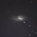 M66 with SN2016cok,                                Michael J. Mangieri