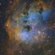 Tadpole Nebula (IC 410),                                Wesley Creech