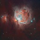 M42,                                Tedlyon