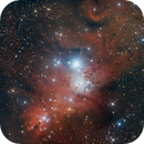 NGC 2264 Christmas Tree Cluster and Cone Nebula,                                Dennis Kaiser