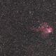 NGC 2467-Skull and Crossbones Nebula Widefield,                                Niko Geisriegler