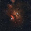 NGC 6559 - LORETA NEBULA,                                Nuccini