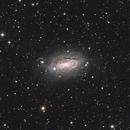 Messier 63 - Sunflower Galaxy,                                jshortt