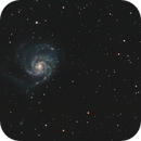 M 101 and friends @ Widefield,                                Wolfgang Zimmermann