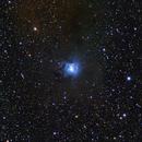 NGC 7023 - The Iris Nebula,                                Randy Roy