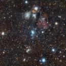Angel Nebula NGC 2170,                                Andrés González