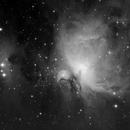 Orion Nebula,                                Rino