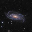 NGC 5033,                                noodle
