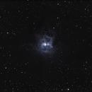 NGC7023 (Iris Nebula),                                Thomas