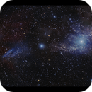 vdb14 reflection nebula in Camelopardalis LRGB,                                Göran Nilsson
