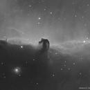 The Horsehead Nebula B33,                                Angelo F. Gambino